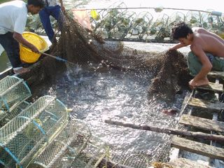 Fishermen harvesting fish at an ecotourism project, this project eventually failed. copyright Saundra Schimmelpfennig